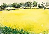 Wistow rape seed fields, Leicestershire.