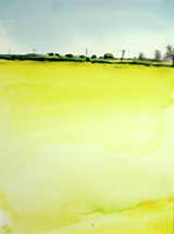 Foston yellow haze. Leicestershire.